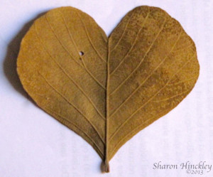Sharon Hinckley - Heart Shaped Leaf